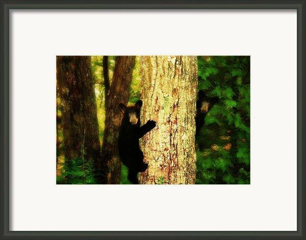 Black Bear Cubs Framed Print By Gray  Artus
