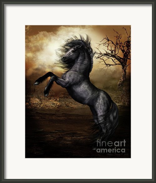 Black Beauty Framed Print By Shanina Conway