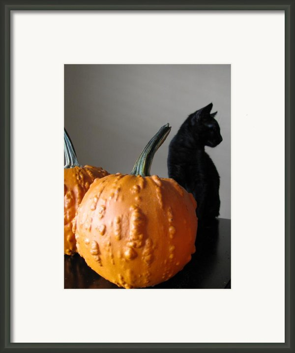 Black Cat Silhouette  Framed Print By Lindie Racz