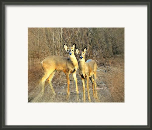 Black Ear Deer Framed Print By Marty Koch