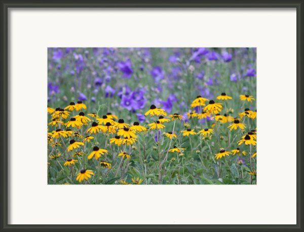 Black-eyes And Blue Balloons Framed Print By Barbara  White