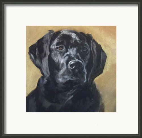 Black Lab Framed Print By Debbie Anderson