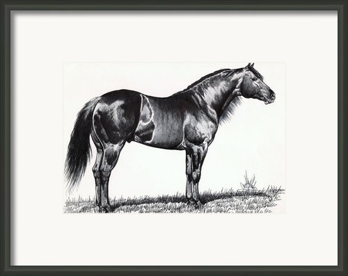 Black Quarter Horse Framed Print By Cheryl Poland