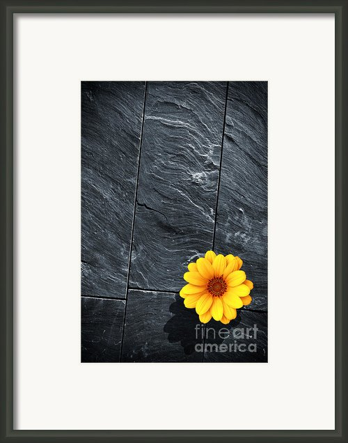 Black Schist Flower Framed Print By Carlos Caetano