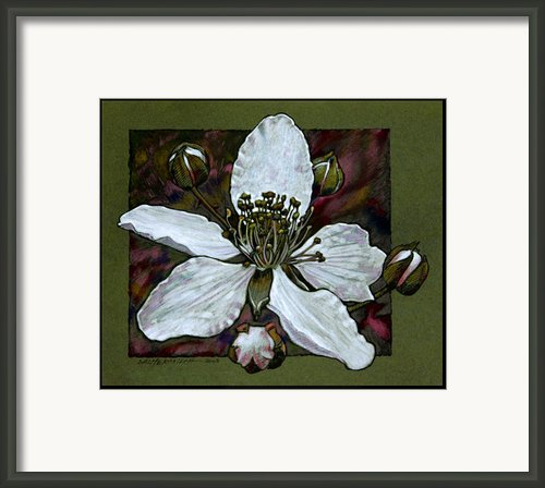 Blackberry Bloom Framed Print By John Lautermilch