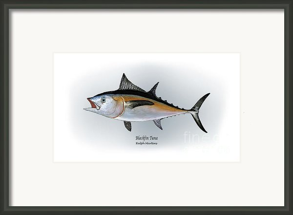 Blackfin Tuna Framed Print By Ralph Martens
