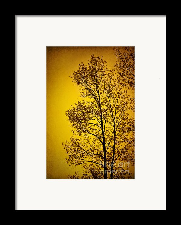 Blazing Sunset Framed Print By Cheryl Davis
