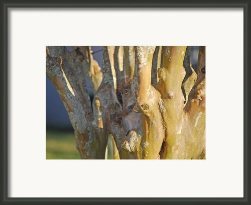 Blending In Framed Print By Adele Moscaritolo