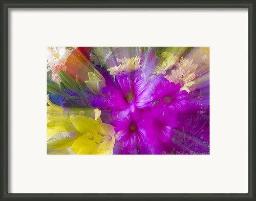 Bloom Zoom Framed Print By Charles Warren