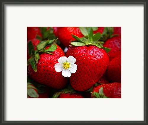 Blossom Among Strawberries Framed Print By Tracie Kaska