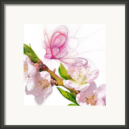 Blossom And Butterflies Framed Print By Sharon Lisa Clarke