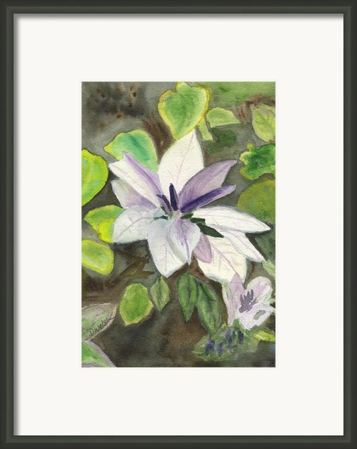 Blossom At Sundy House Framed Print By Donna Walsh