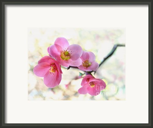 Blossoms Framed Print By Marion Cullen