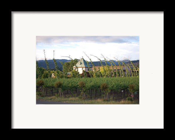 Blowing Grape Vines Framed Print By Holly Blunkall