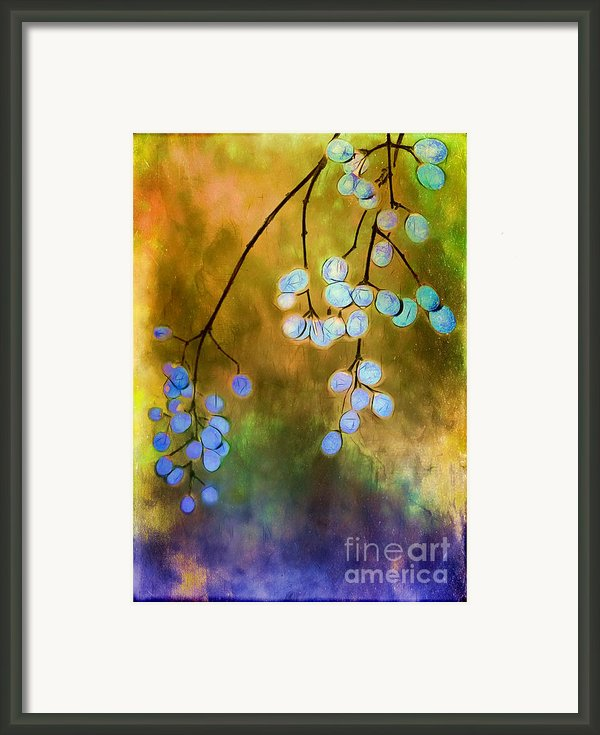 Blue Autumn Berries Framed Print By Judi Bagwell