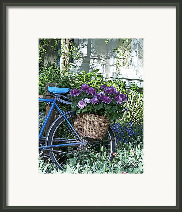 Blue Bike Framed Print By Cheri Randolph