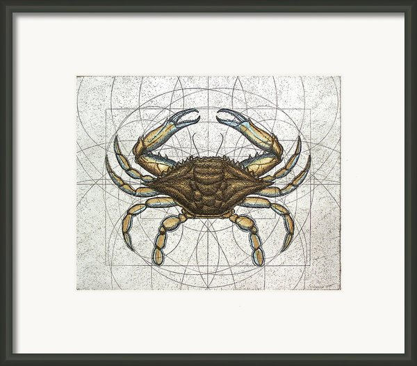 Blue Crab Framed Print By Charles Harden