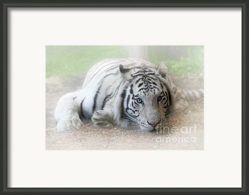 Blue Eyes Framed Print By Jeannie Burleson