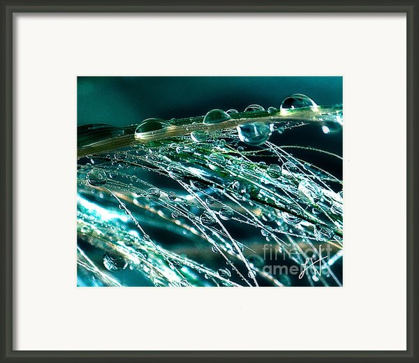 Blue Grass Framed Print By Artist And Photographer Laura Wrede