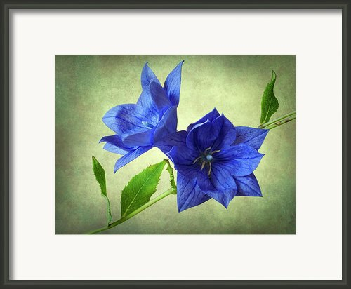 Blue Framed Print By John Burnett
