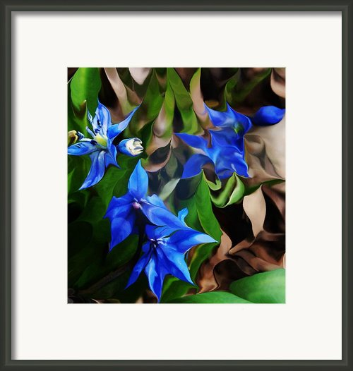 Blue Manipulation Framed Print By David Lane