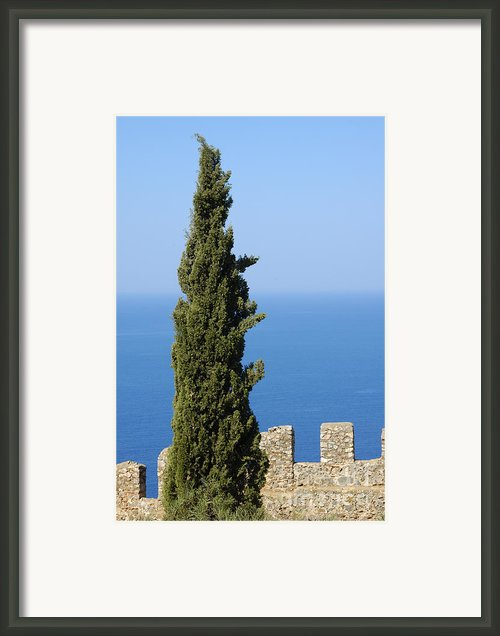 Blue Ocean And Sky Green Tree - Serene And Calming  Framed Print By Matthias Hauser