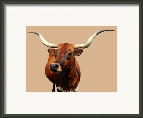 Blue Ribbon Pose Framed Print By Betty Northcutt