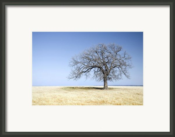 Blue To Remember Framed Print By Mike Irwin