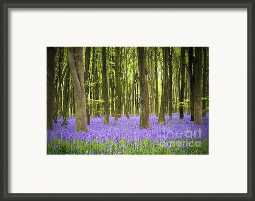 Bluebell Carpet Framed Print By Jane Rix
