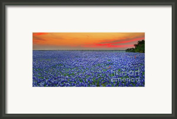 Bluebonnet Sunset Vista - Texas Landscape Framed Print By Jon Holiday