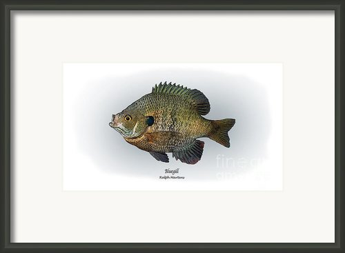 Bluegill Framed Print By Ralph Martens