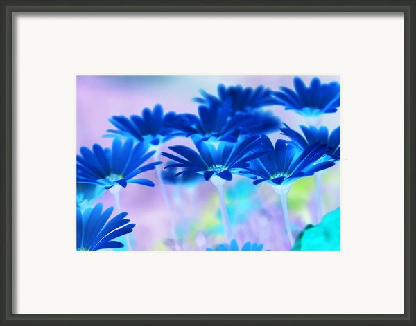 Bluemination Framed Print By Robin Webster
