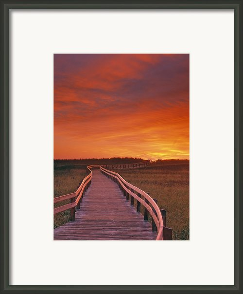 Boardwalk Along The Salt Marsh Framed Print By Darwin Wiggett