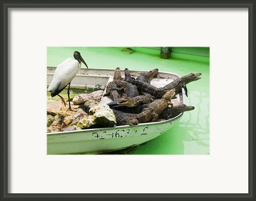 Boat Full Of Alligators  Framed Print By Garry Gay