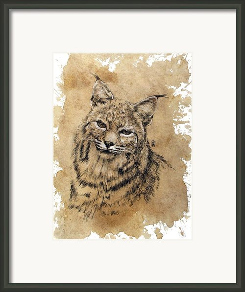 Bobcat Framed Print By Debra Jones