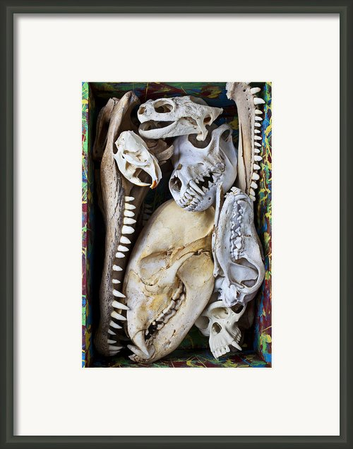 Bone Box Framed Print By Garry Gay