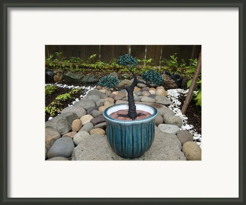 Bonsai Tree Medium Round Blue Ceramic Planter   Framed Print By Scott Faucett