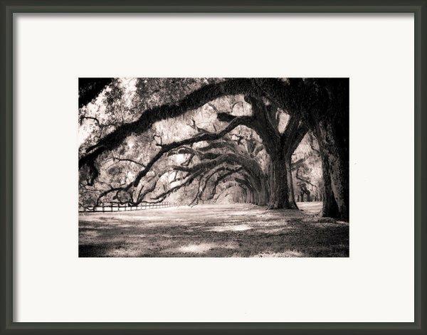 Boone Hall Plantation Live Oaks Framed Print By Dustin K Ryan