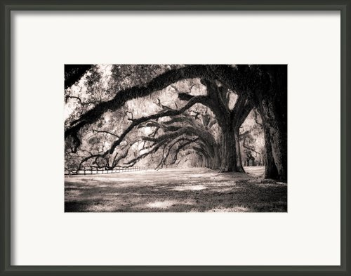 Boone Hall Plantation Live Oaks Framed Print By Dustin K Ryan
