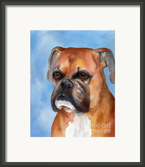 Boxer Framed Print By Cherilynn Wood