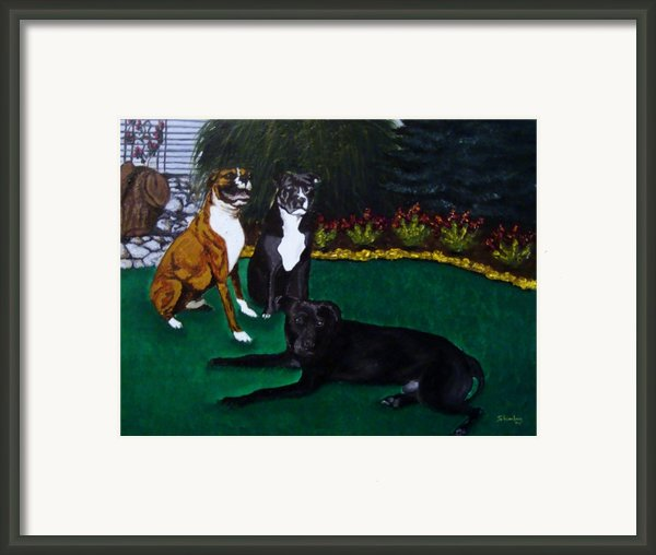 Boxer Pitbull Mix Framed Print By Amanda Schambon