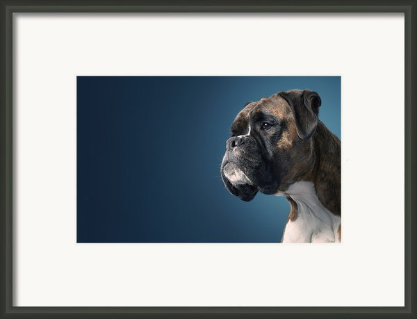 Boxer Profile Framed Print By Tim Flach
