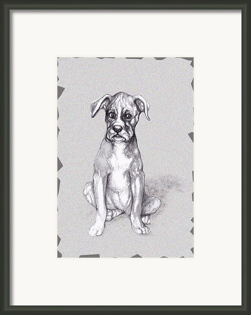 Boxer Pup Framed Print By Peggy Wilson