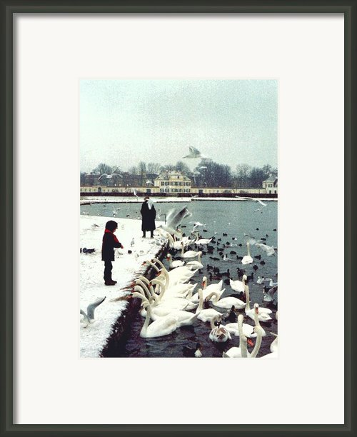 Boy Feeding Swans- Germany Framed Print By Nancy Mueller