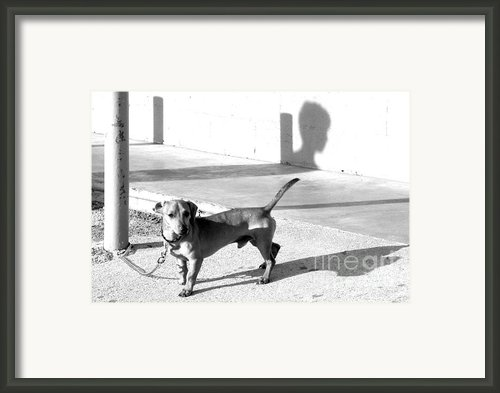 Boy Meets Dog Framed Print By Joe Jake Pratt