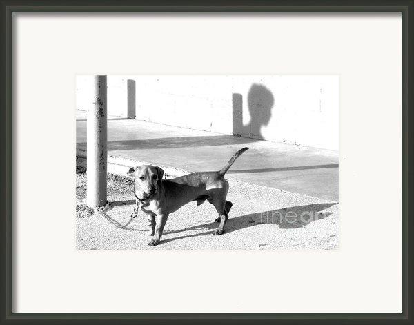 Boy Meets Dog Framed Print By Joe Jake Pratt