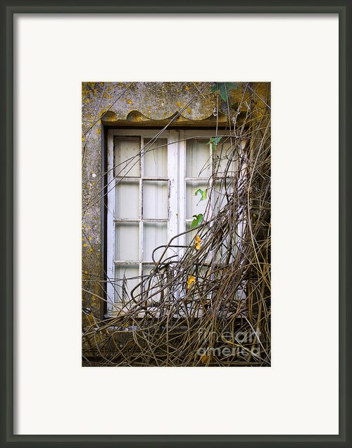 Branchy Window Framed Print By Carlos Caetano