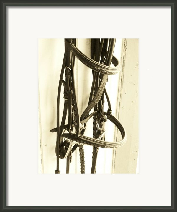 Bridle Framed Print By Donna Thomas