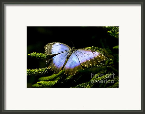 Bright Blue  Framed Print By Leslie Leda