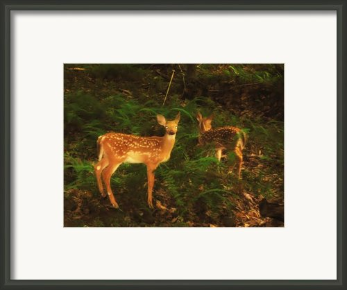 Bright Eyes Framed Print By Bill Cannon